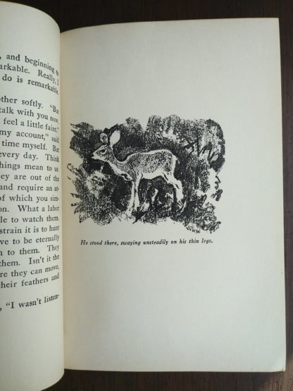 An illustration of Bambi by Kurt Wiese in a 1928 copy of Bambi A Life in the Woods