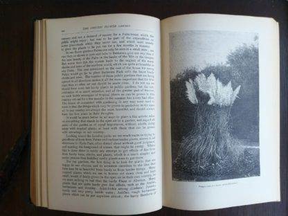 pampas grass picture in the book English Flower Garden by W. Robinson 1913 twelfth edition