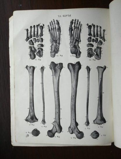 image inside a Vintage Anatomy Atlas of the Human Body Modern Medicine Publishing Company