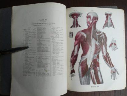 undated Vintage Anatomy Atlas of the Human Body Modern Medicine Publishing Company