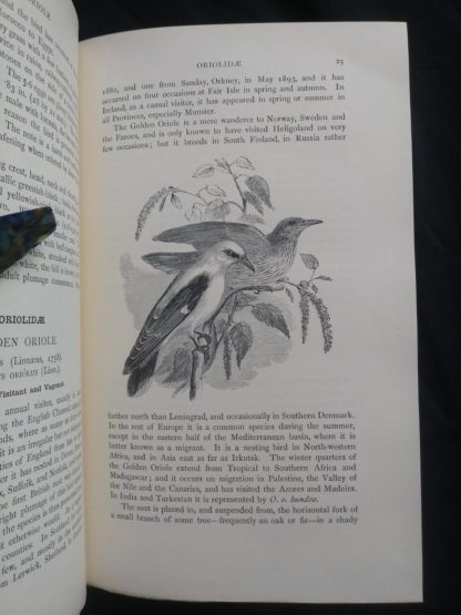1927 Manual of British Birds 3rd edition Howard Saunders and W. Eagle Clarke illustration on page 25