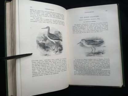1927 Manual of British Birds 3rd edition Howard Saunders and W. Eagle Clarke illustration on page 590 and 591
