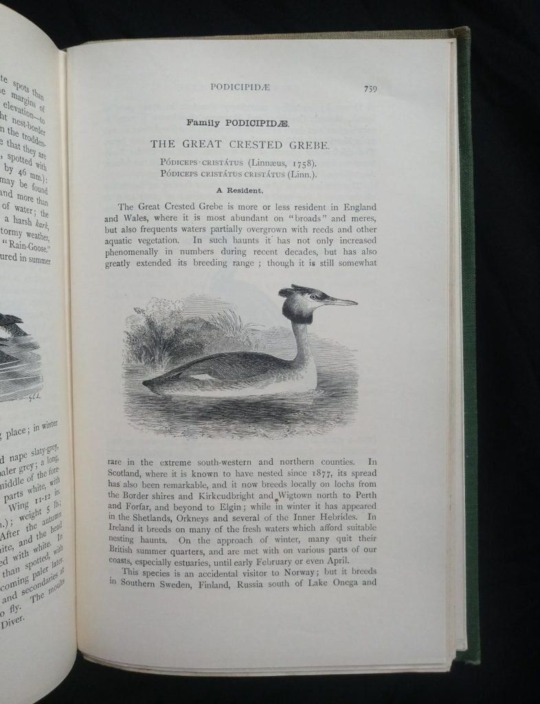 1927 Manual of British Birds 3rd edition Howard Saunders and W. Eagle Clarke illustration on page 759