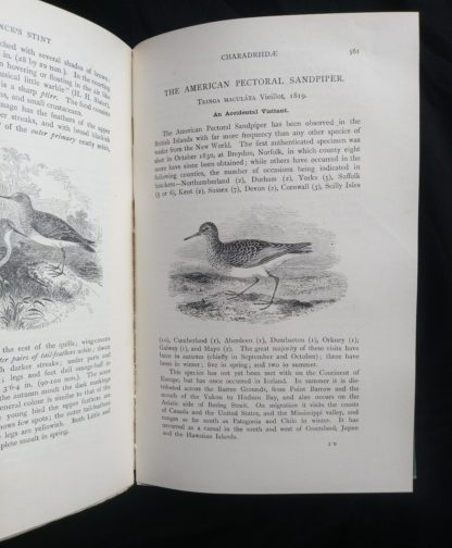 1927 Manual of British Birds 3rd edition Howard Saunders and W. Eagle Clarke page 561
