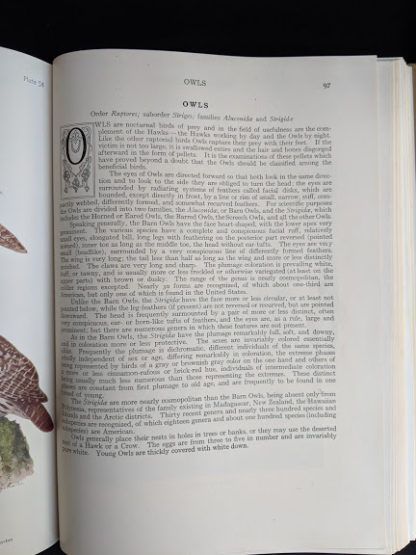 1936 copy of BIRDS OF AMERICA with 106 Color Plates published by Doubleday & Company - Owls