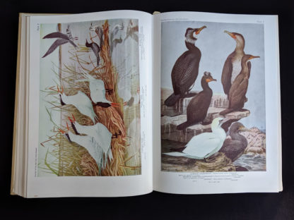 1936 copy of BIRDS OF AMERICA with 106 Color Plates published by Doubleday & Company - color plate 8 and 9