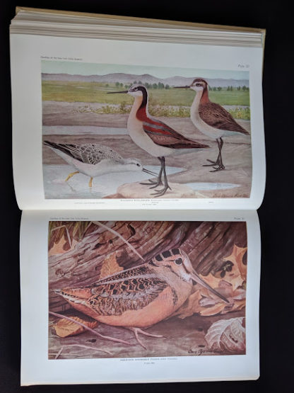 1936 copy of BIRDS OF AMERICA with 106 Color Plates published by Doubleday & Company - color plates