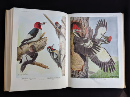 1936 copy of BIRDS OF AMERICA with 106 Color Plates published by Doubleday & Company - red headed woodpecker