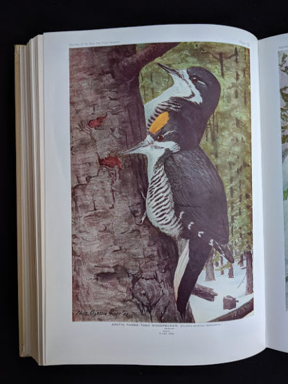 color plate of a Arctic three toed woodpecker in a 1936 copy of BIRDS OF AMERICA with 106 Color Plates published by Doubleday & Company