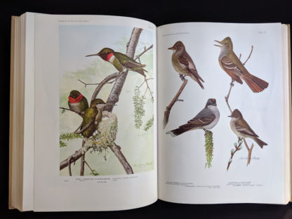 color plates inside a 1936 copy of BIRDS OF AMERICA with 106 Color Plates published by Doubleday & Company