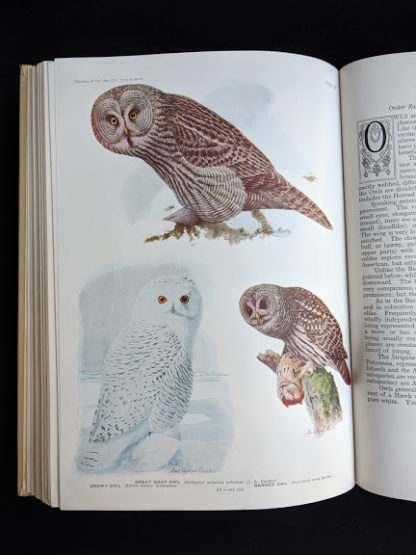 color plates of Owls in a 1936 copy of BIRDS OF AMERICA with 106 Color Plates published by Doubleday & Company