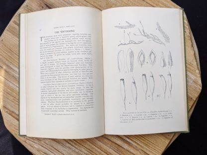 The Entodons - 1900 copy of Mosses with a Hand-Lens - A Non - Technical Handbook of the More Recognized Mosses of the North-Eastern United States - By A J Grout