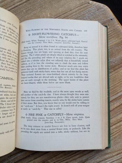 Night Flowering Catchfly - Silene Noctiflora - 1939 copy of Wild Flowers of the Northern States and Canada by Arthur Craig Quick - First Edition