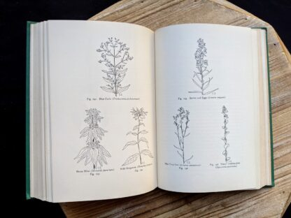 Sketches of wildflowers - 1939 Wild Flowers of the Northern States and Canada by Arthur Craig Quick