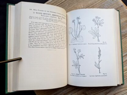Wood Betony and other sketches - 1939 copy of Wild Flowers of the Northern States and Canada by Arthur Craig Quick - First Edition