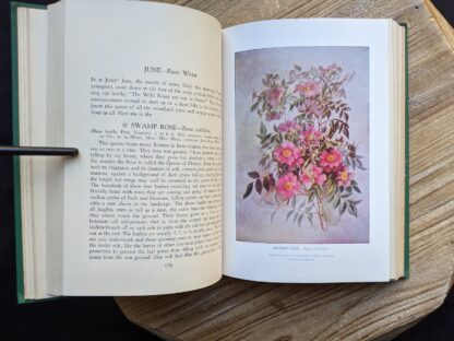 illustration of a Swamp Rose insde a 1939 copy of Wild Flowers of the Northern States and Canada by Arthur Craig Quick - First Edition