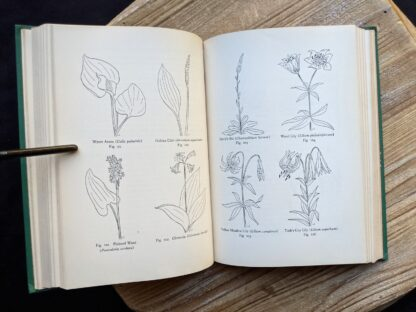 sketches of wild flowers - 1939 copy of Wild Flowers of the Northern States and Canada by Arthur Craig Quick - First Edition